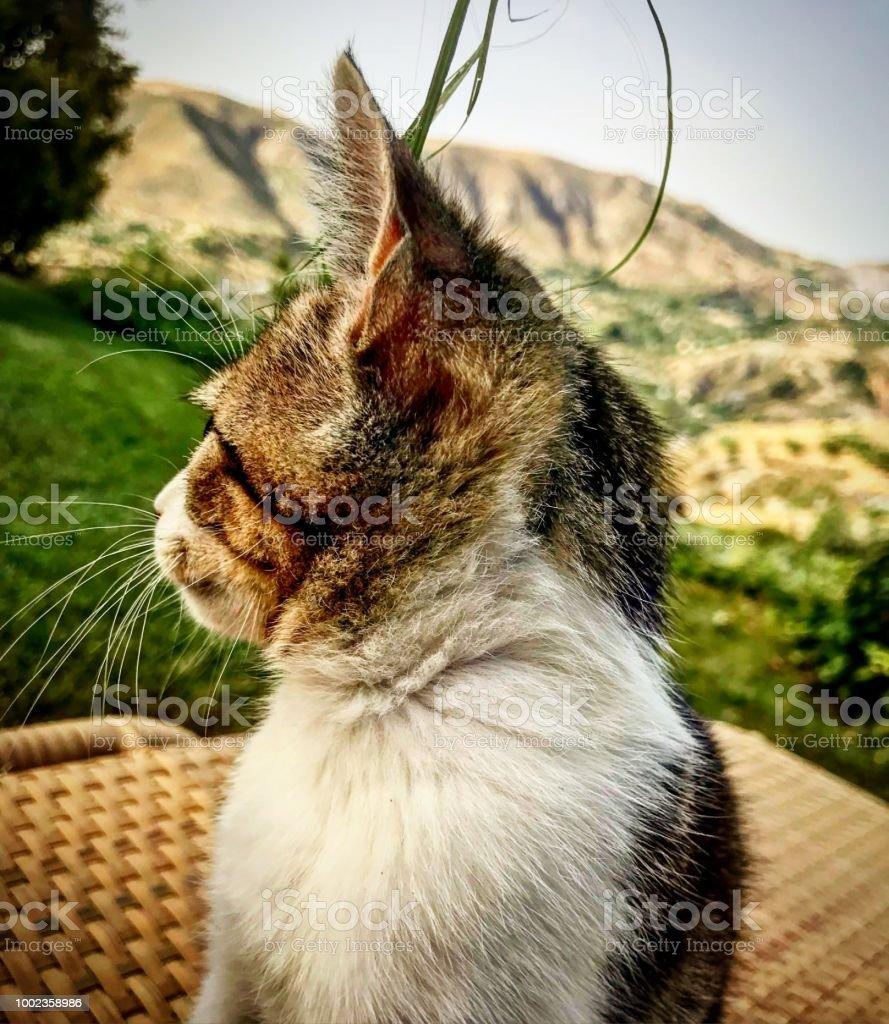 Kitten head in mountain Garden stock photo