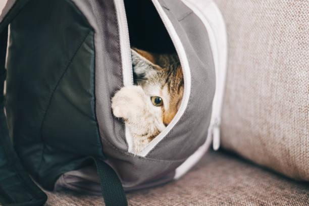 Kitten hiding in a backpack picture id1132281783?b=1&k=6&m=1132281783&s=612x612&w=0&h=ketm8dkngbr8muqf 6dlll7iszchvtlnp6wdhbdu3 u=