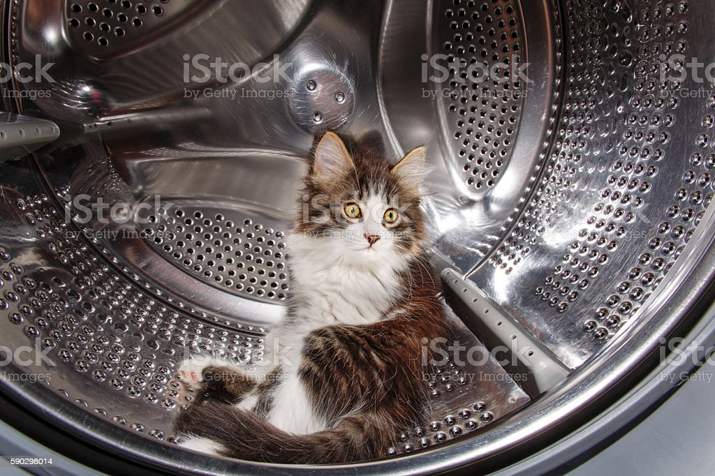 Kitten hiding in the washing machine royaltyfri bildbanksbilder