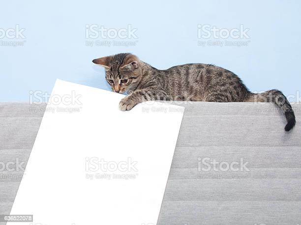 Kitten holding a white sheet picture id636522078?b=1&k=6&m=636522078&s=612x612&h=mbxnqlk2vy 8e yj6yolxkikdk4ypozscwxs3wx1rwu=