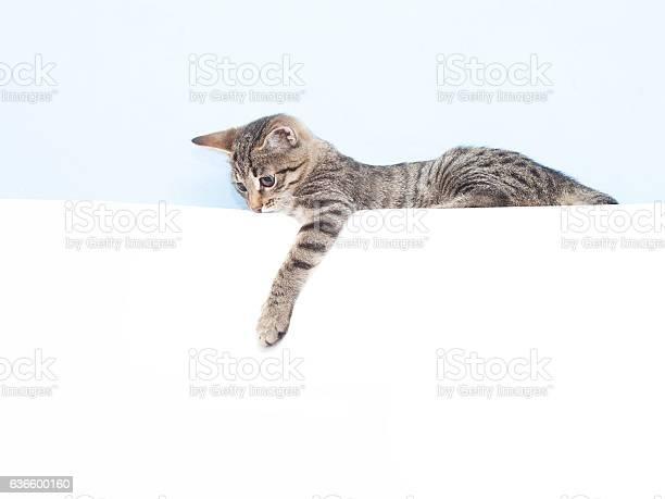 Kitten holding a white sheet picture id636600160?b=1&k=6&m=636600160&s=612x612&h=civylyxfgaqq9cek4zjrbmedbyrsmfela l4bn2lvpm=