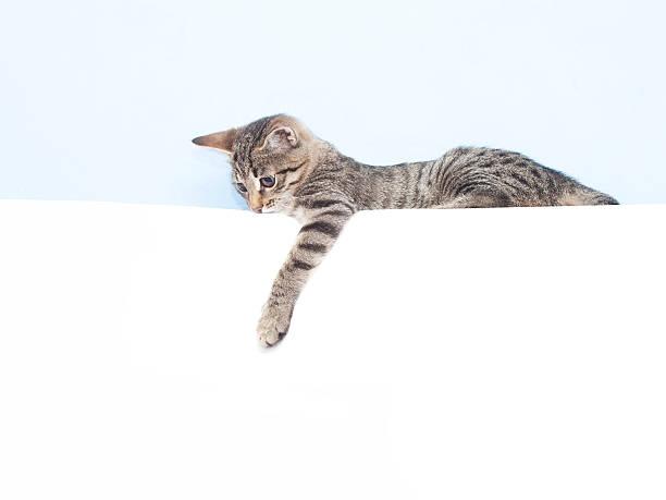 kitten holding a white sheet - lustige texte stock-fotos und bilder