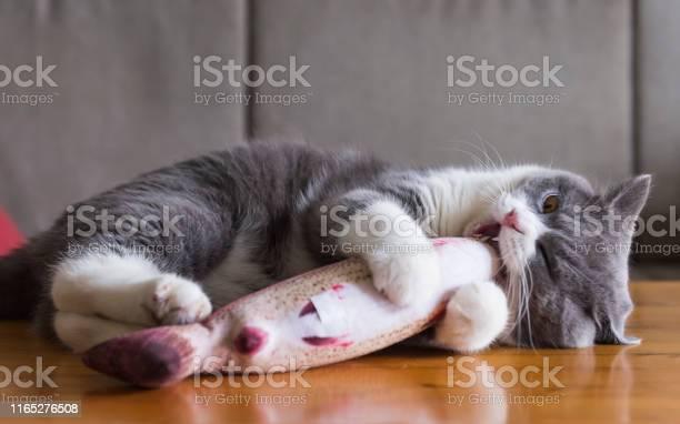 Kitten holding toy fish in bite picture id1165276508?b=1&k=6&m=1165276508&s=612x612&h=j3ingwxi0vrmymzf00rx8borbsdu7davatrwb4mvzom=