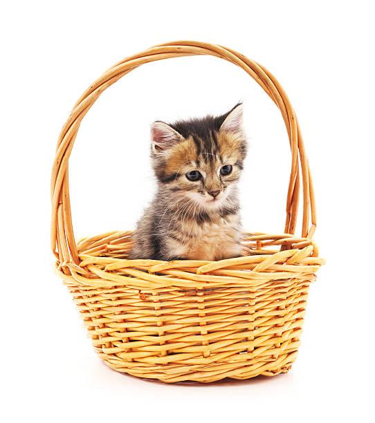 Kitten in a basket picture id622035080?b=1&k=6&m=622035080&s=612x612&w=0&h=lyfsz2zetxmt ryoh95l6 erpxzr6hvq 2yqsdowzgk=