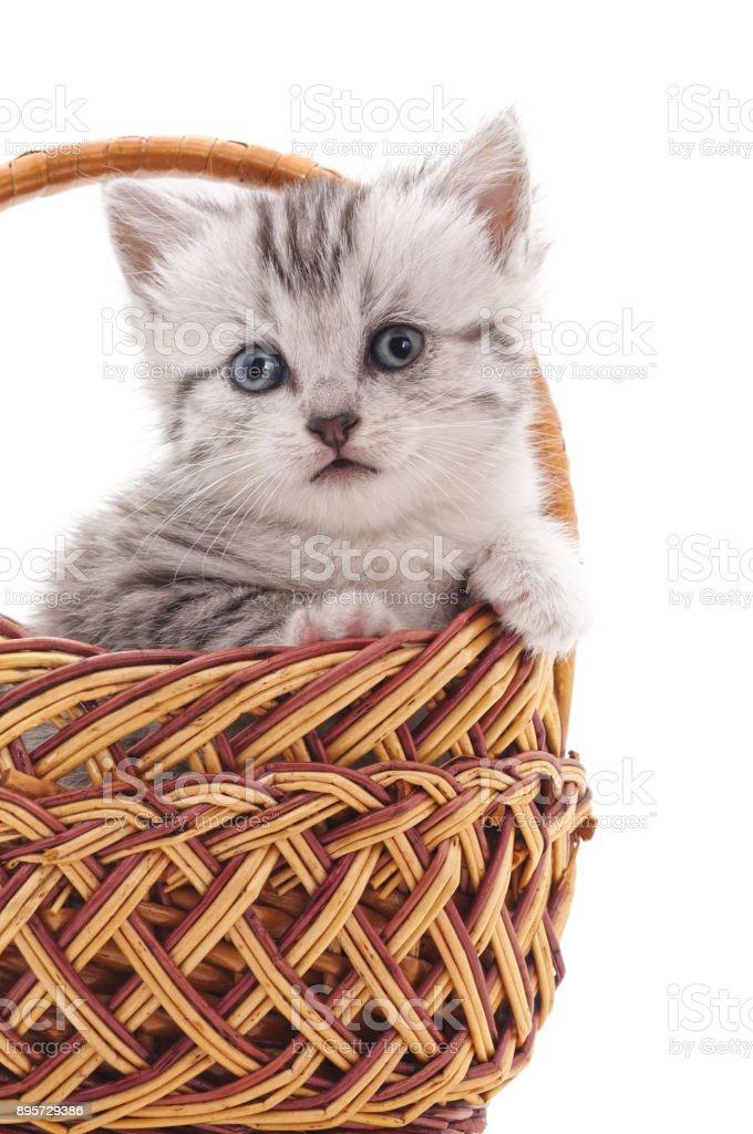 Kitten in a basket. stock photo