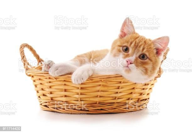 Kitten in a basket picture id911714420?b=1&k=6&m=911714420&s=612x612&h=wybemqa46iy7is8bz7nfnxum6gztxjzmksg i r7iyi=