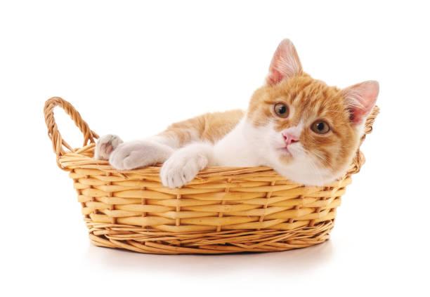 Kitten in a basket picture id911714420?b=1&k=6&m=911714420&s=612x612&w=0&h=hoen3xusdyjgfsjfqdriva7z4b6afxlpcpfqwm7azqq=