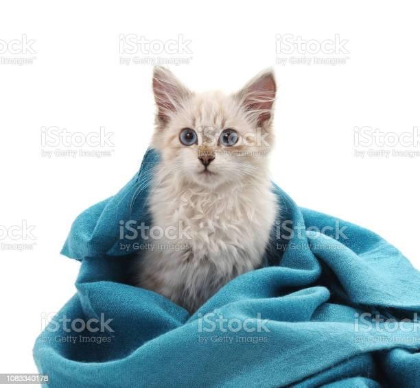 Kitten in a blue scarf picture id1083340178?b=1&k=6&m=1083340178&s=612x612&h=rbf2zeemo7gxxikkcldht8vu9owpvbcie0ytdvjmrdw=