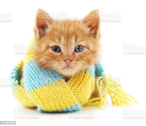 Kitten in a blue scarf picture id914802886?b=1&k=6&m=914802886&s=612x612&h=ndwzt0niq6zhxojuyo59828iggyeplniopirybdcjy8=
