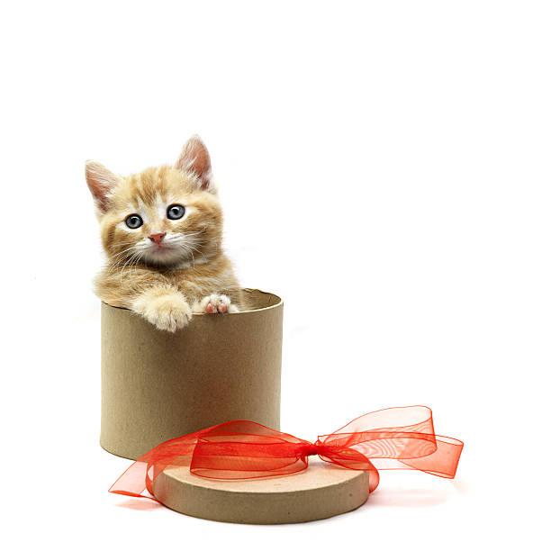 Kitten in a box picture id173541313?b=1&k=6&m=173541313&s=612x612&w=0&h=phx cbfevs8aopshembusybq9tbnd7uvibi6tlxsbkq=
