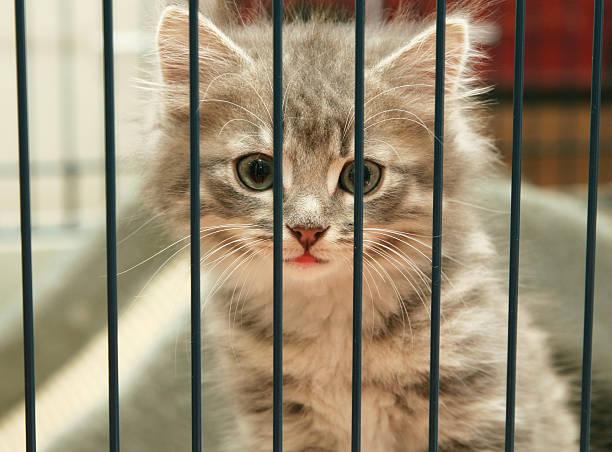Kitten in a cage looking out picture id145160735?b=1&k=6&m=145160735&s=612x612&w=0&h=5frykf464xcyabmvb8exuekak7oj7djlhdyq9t2vdqe=