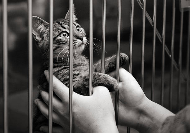 Kitten in a cage looking up stock photo
