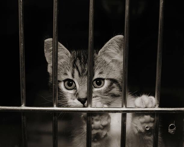 Kitten in a cage picture id145194770?b=1&k=6&m=145194770&s=612x612&w=0&h=kdziklfkvtdpgb duplkwn0t293yemj ts4s4s1p5y4=