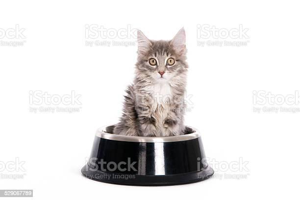 Kitten in a dogs bowl picture id529067789?b=1&k=6&m=529067789&s=612x612&h=ll5dmdh6yajbw6z3wbjttmpuxfmh0xux1q6dmcuawj8=