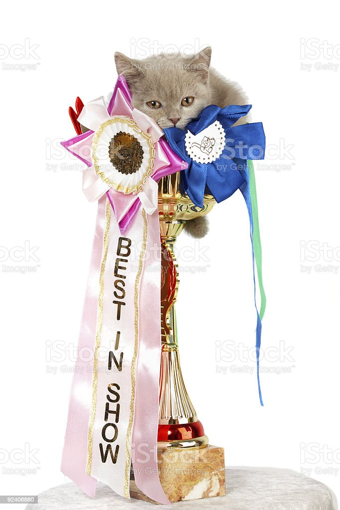 Kitten in a large golden trophy royalty-free stock photo