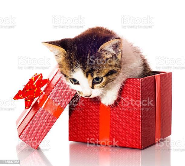 Kitten in a present box picture id178537988?b=1&k=6&m=178537988&s=612x612&h=orum6tbkur3vt5de31u1kgqtvdr58b90fobuj2pkneu=