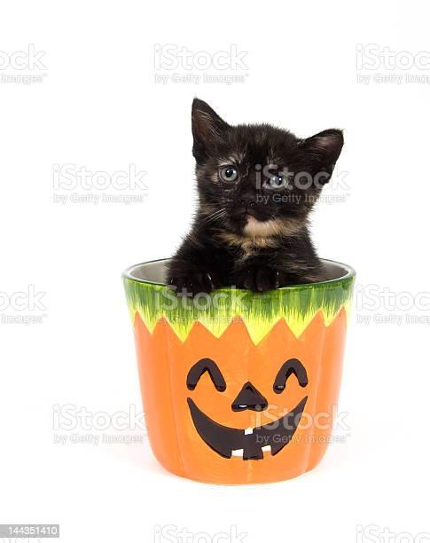 Kitten in a pumpkin jar picture id144351410?b=1&k=6&m=144351410&s=612x612&h=vi jc9xmv0njduju8eh9xp8ca1sfneqebbjorvyjyow=