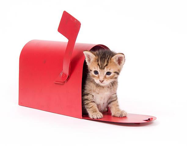 Kitten in a red mailbox picture id144231816?b=1&k=6&m=144231816&s=612x612&w=0&h=zxg6ed6jafpq1anmqhifuzg7liisbmrjaltpwcugmly=