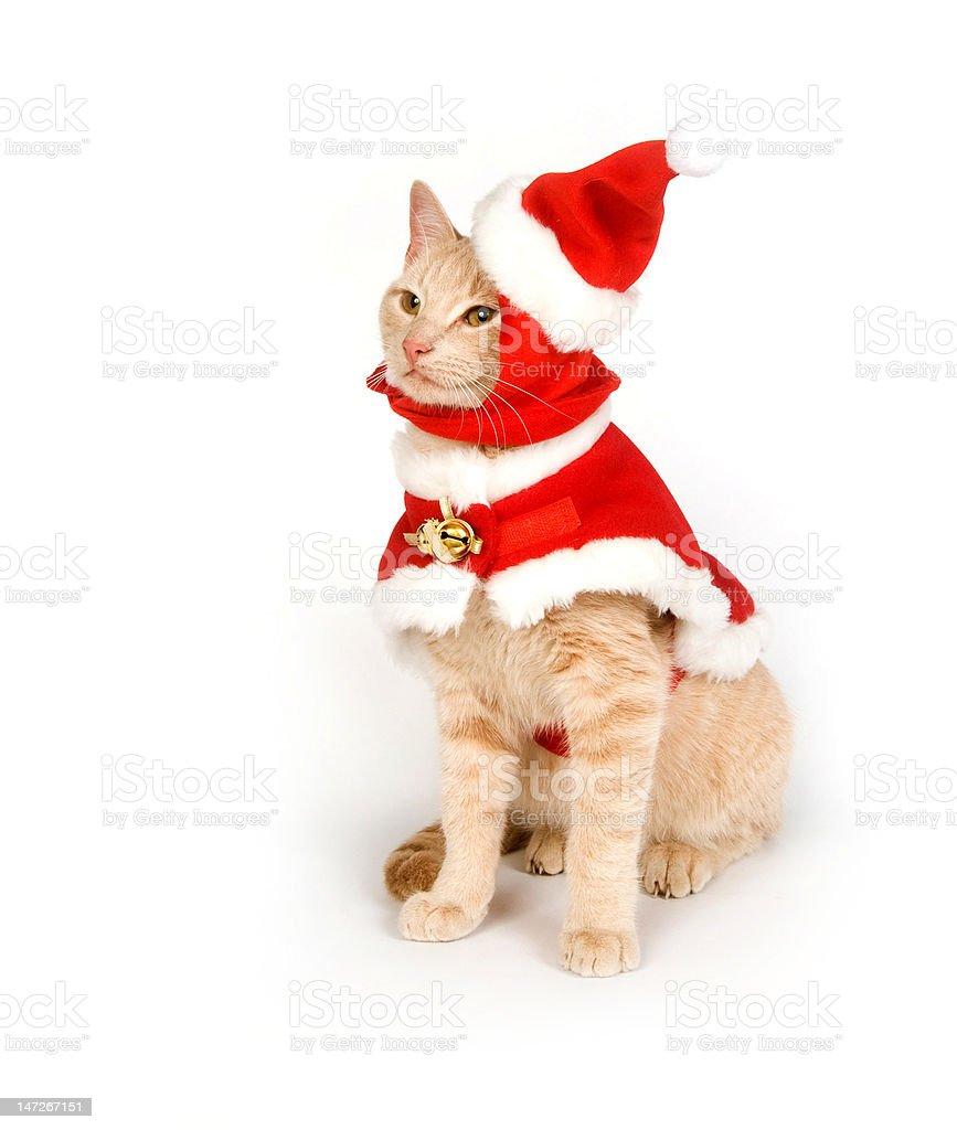 Kitten in a santa suit stock photo