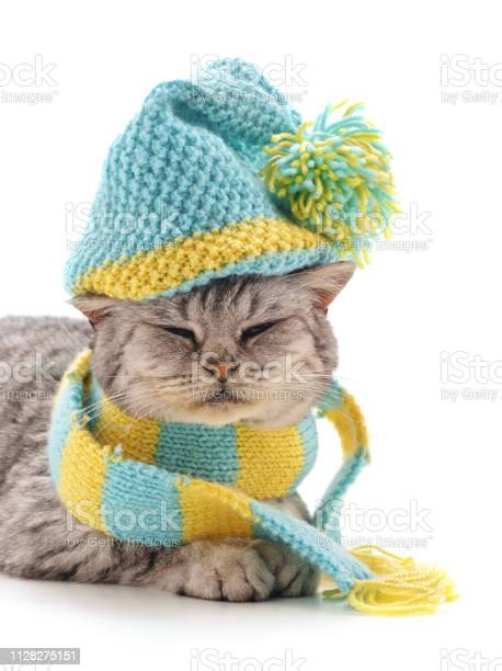 Kitten in a striped scarf and in the hat picture id1128275151?b=1&k=6&m=1128275151&s=612x612&h=yc 8x9utgfdztola77eqth7 buizdwlsvmbckxwfwt8=