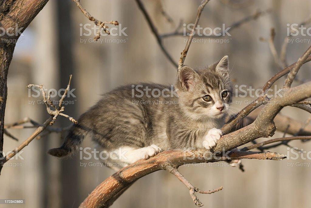 Kitten in a Tree stock photo