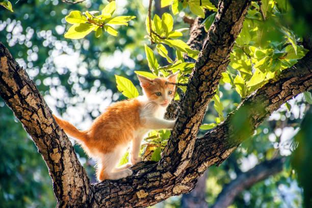 Kitten in a tree picture id864104192?b=1&k=6&m=864104192&s=612x612&w=0&h=pjcpsgr1oifveguau yrbh vrixr6n3zwfpt9lzfsma=