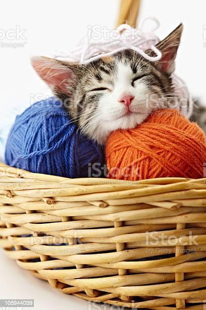 Kitten in a wicker basket surrounded by balls of yarn picture id105944039?b=1&k=6&m=105944039&s=612x612&h=kjcdhzyxnjhgk2dvaulea6pfvfwmqar4aa3dd1oody8=