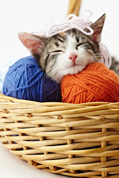 Kitten in a wicker basket surrounded by balls of yarn picture id105944039?b=1&k=6&m=105944039&s=612x612&w=0&h=r98fevki vb5v2dg6e8hxpl0gbomoy04 mjmxe9cwfm=