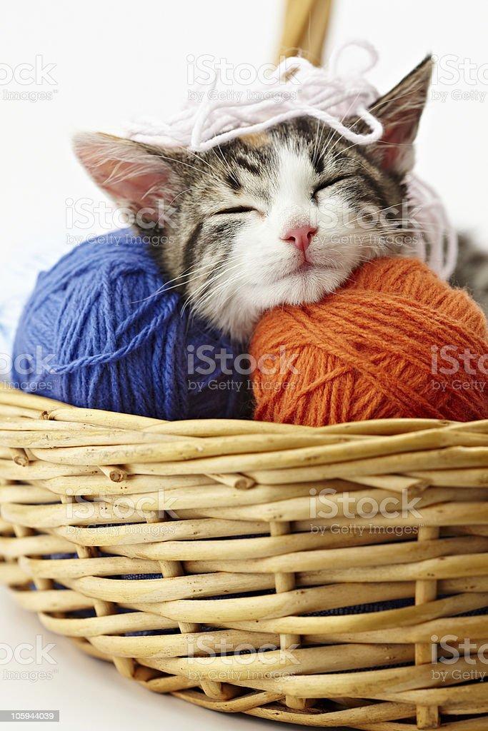 A kitten in a wicker basket surrounded by balls of yarn stock photo
