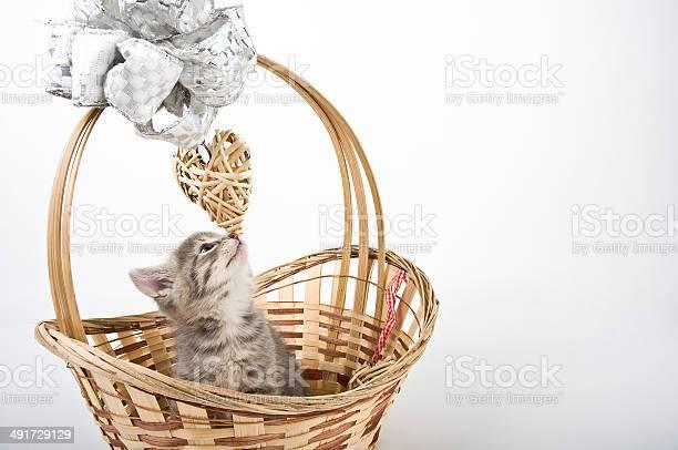 Kitten in basket picture id491729129?b=1&k=6&m=491729129&s=612x612&h=93fdbseei9kwd ovlcbgphbgm1 4vmrkaniki7dvnnw=