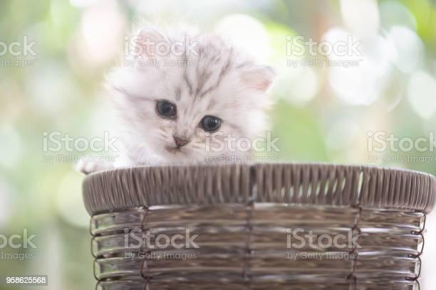 Kitten in basket picture id958625568?b=1&k=6&m=958625568&s=612x612&h=cx2239rbiki8uyyrer3jpkl1vek 1me87nzqdjq6r74=