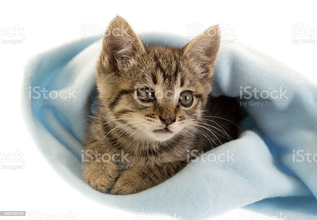 Kitten in Blanket stock photo