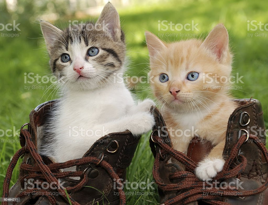 kitten in boots royalty-free stock photo