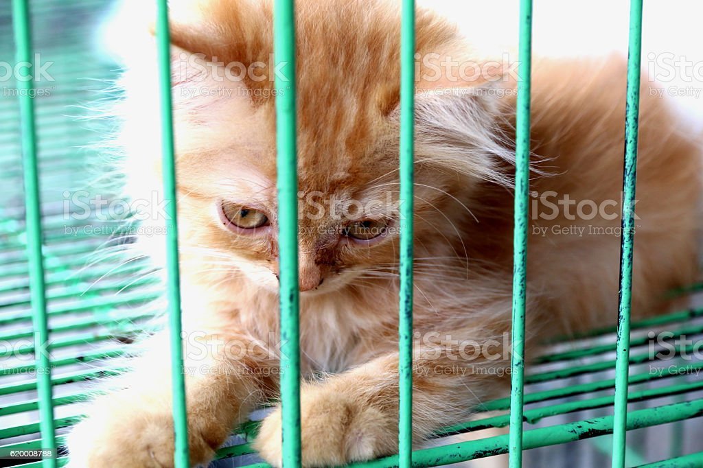 Kitten in cage foto de stock royalty-free
