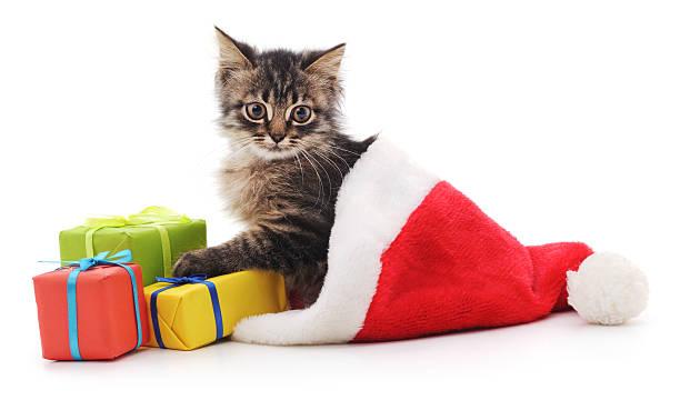 Kitten in christmas hat picture id614306388?b=1&k=6&m=614306388&s=612x612&w=0&h=ehjkydi17bz96f7wnckeg6hp08f92o v5muq6fzd9kq=