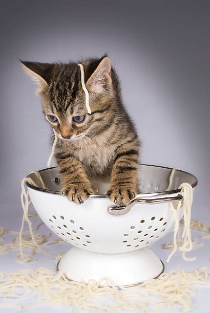Kitten in colander picture id157429073?b=1&k=6&m=157429073&s=612x612&w=0&h=pyvdjiz8tumh jzpjgkw0swb mshf 2l zw4g 7veh8=