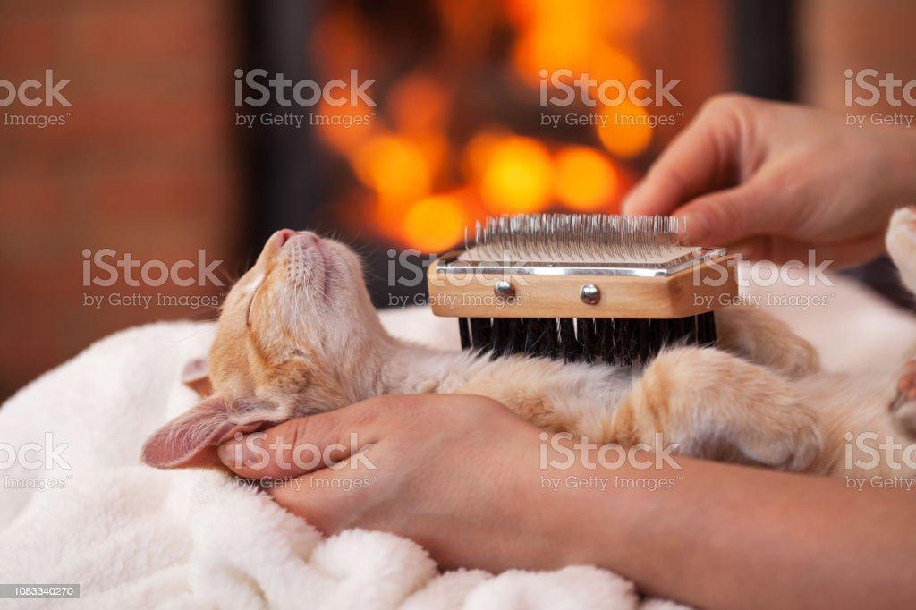 Kätzchen in tiefe Entspannung genießen, vom Eigentümer, geringer Tiefe gebürstet – Foto