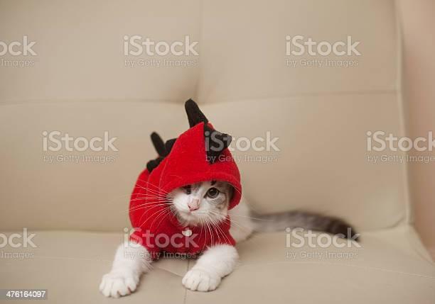 Kitten in dinosaur costume picture id476164097?b=1&k=6&m=476164097&s=612x612&h=3ppnsrphmpahu3sssgkqh4nh9hezaosv8u5alo51u4y=