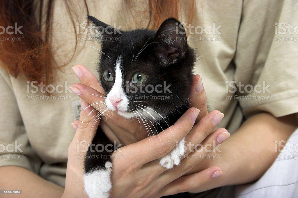 kitten in hands stock photo