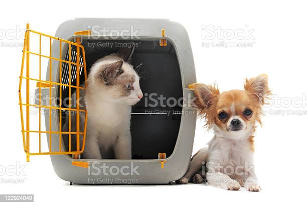 Kitten in pet carrier and chihuahua picture id122924049?b=1&k=6&m=122924049&s=612x612&h=f6k27xqhkqydjfm9oxddf2hrv93 bllixy3qqpwxnec=
