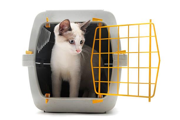 Kitten in pet carrier picture id141319144?b=1&k=6&m=141319144&s=612x612&w=0&h=vsor6qozyc8ctey3qp3p2xdc ijhdgoi83b5aqnoabo=