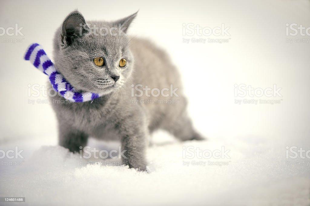 Kitten in snow stock photo