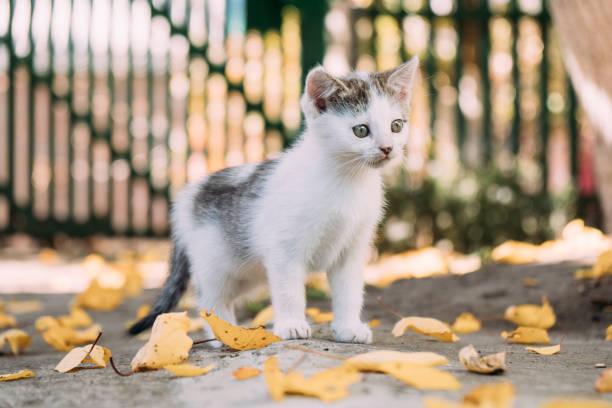 Kitten in the autumn garden picture id1182390048?b=1&k=6&m=1182390048&s=612x612&w=0&h=3bnprbllcoga4cwq4qbjt9lssvkt5xhyn4lwmxd4y3i=