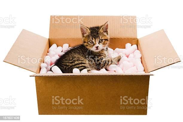 Kitten in the box picture id157607409?b=1&k=6&m=157607409&s=612x612&h=ywzwth7lfip8whnkrnxeayvaqk oel2pwxu1pidlipu=