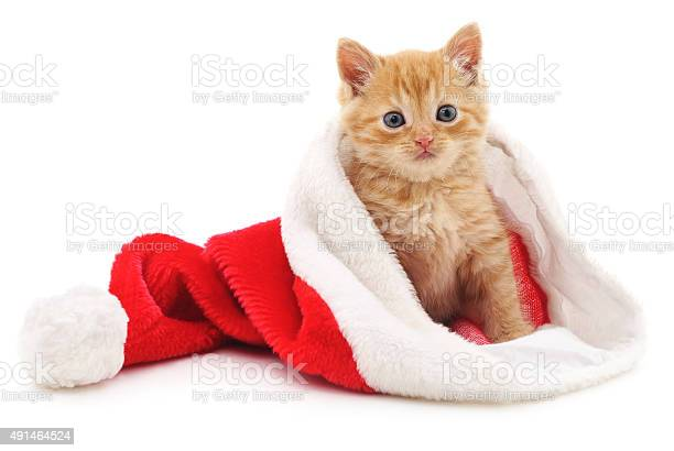 Kitten in the christmas hat picture id491464524?b=1&k=6&m=491464524&s=612x612&h=aumidxtxf89mdfpcgip15n1egsgzx21omxolecwy6hk=