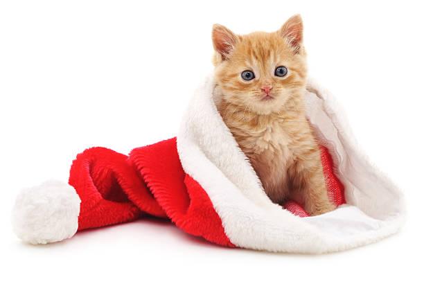 Kitten in the christmas hat picture id491464524?b=1&k=6&m=491464524&s=612x612&w=0&h=wwv5yelpctjtcwntxgqfxygziur4da4znt2tdifcw2s=