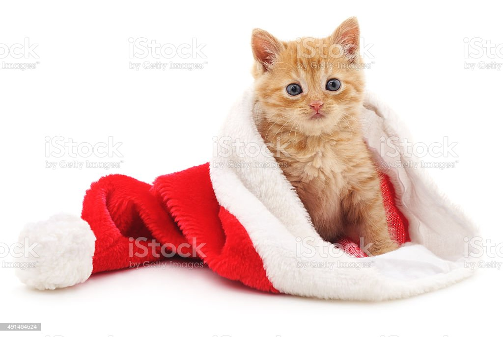 Kitten in the Christmas hat. stock photo