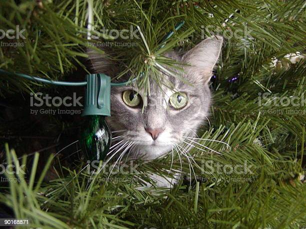 Kitten in the christmas tree picture id90168871?b=1&k=6&m=90168871&s=612x612&h= ei sfwjw22z h4jx8gtauvohkttwrnuthtyrcbczj0=