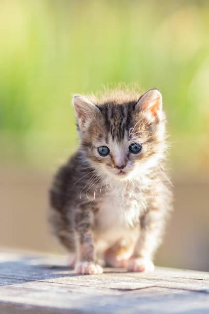 Kitten in the garden picture id1187289395?b=1&k=6&m=1187289395&s=612x612&w=0&h=qgu9rc1g48v1lxfsruny dcat1iaq 3meurgf4zwqlc=