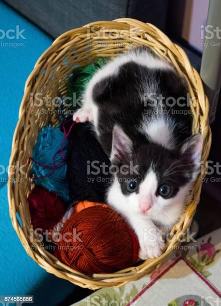 Kitten in wicker basket picture id874565686?b=1&k=6&m=874565686&s=612x612&h=k jcxouxbmry0kyylgr3qxwifxcynh277lihi  0ifg=